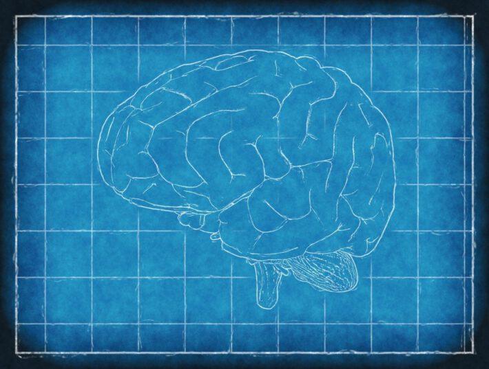 Narysowany mózg