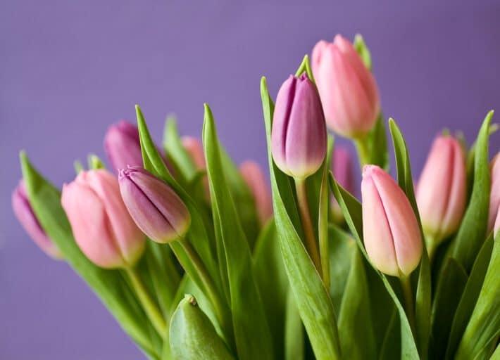 Bukiet kwiatów na prezent