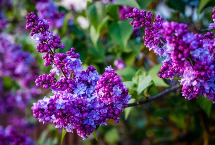 Roślina w ogrodzie