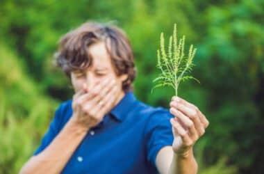 Letnia alergia