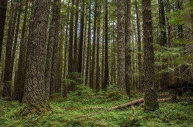 Las podczas wycieczki po grzyby