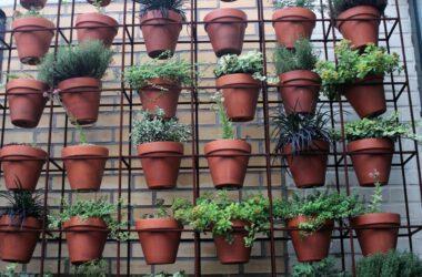 Doniczki z ziołami na balkonie