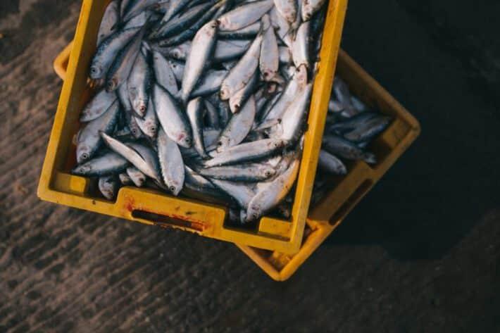 Świeże ryby w skrzyniach