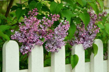 Pomysł na ogrodzenie