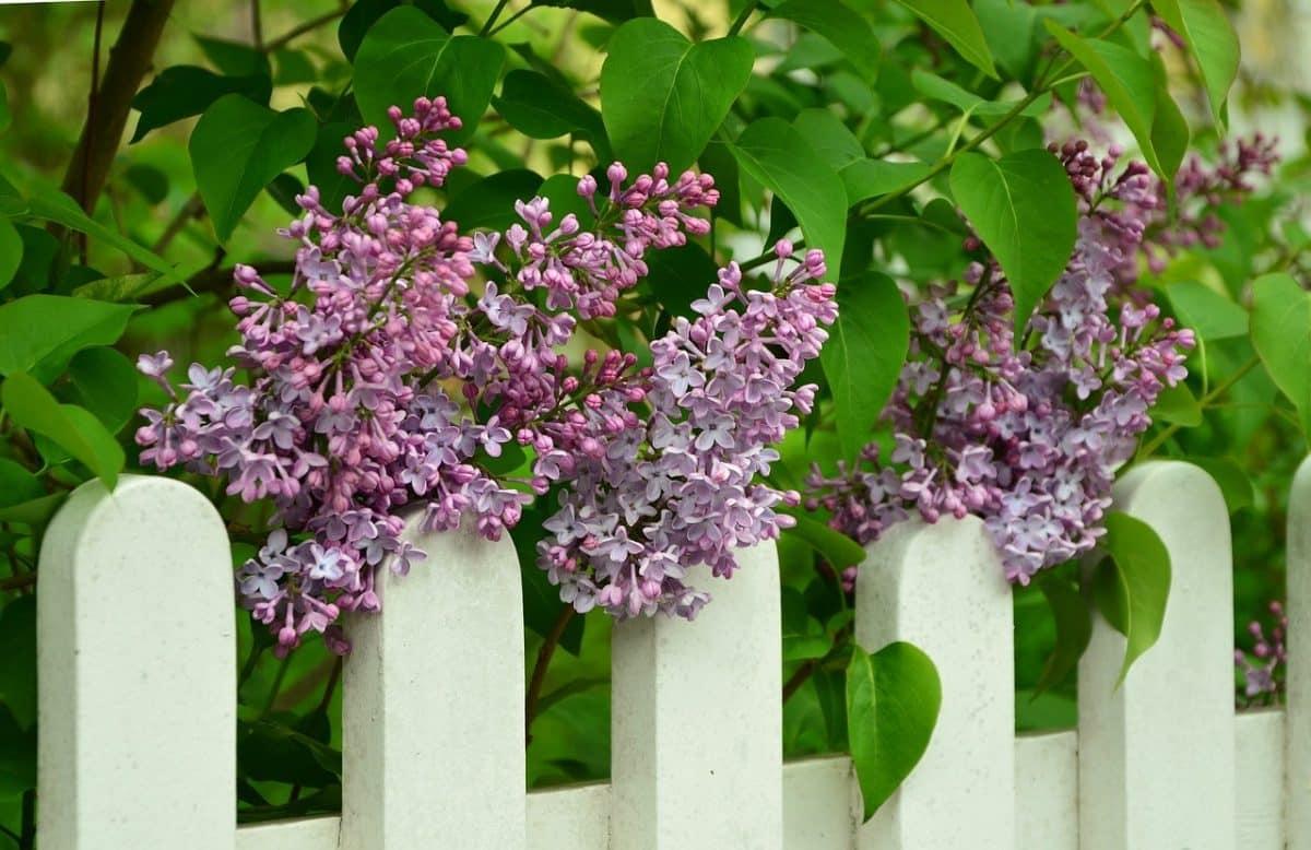 Pomysł na ogrodzenie ogródka roślinami
