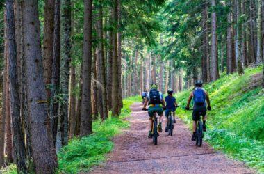 Rowery MTB w lesie