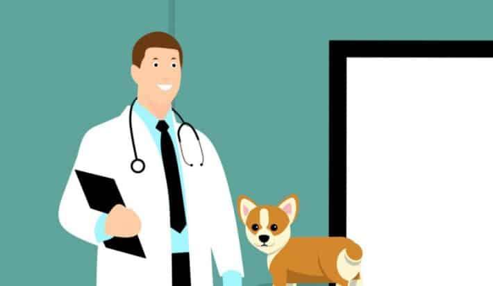 Odrobaczania psa u weterynarza