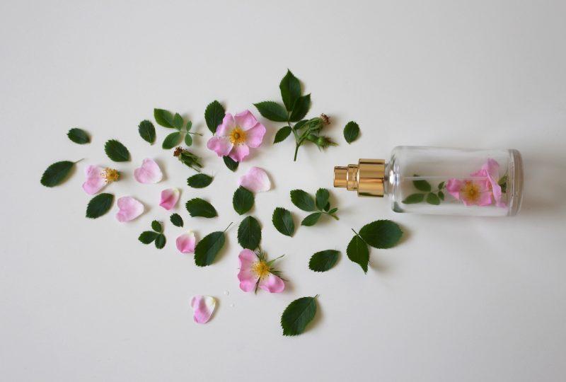 skład kosmetyków naturalnych, rośliny