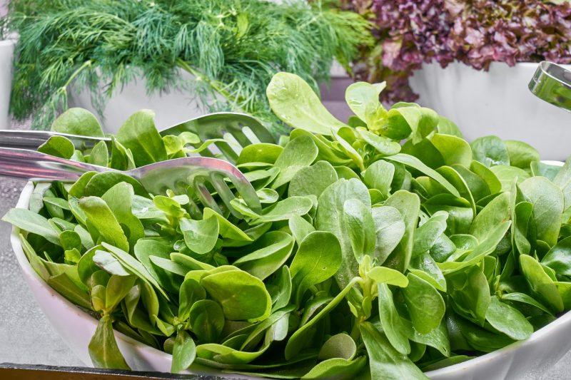 szpinak, zielenina w diecie