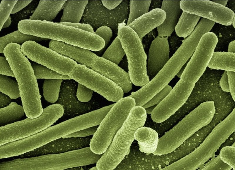 bakterie, probiotyki
