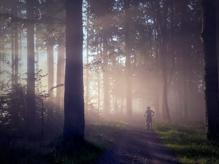 Człowiek na rowerze na tle lasu