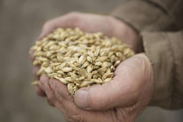 Z czego tworzone są produkty Bio i jak wpływają na zdrowie