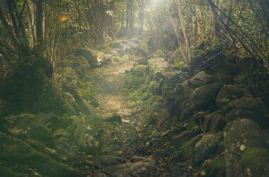 droga w lesie ze skałami i przebłyskami słońca między drzewami
