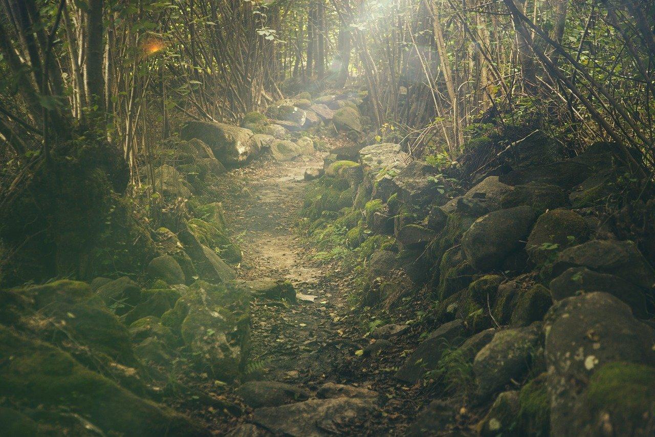 Wyprawa do lasu? Sprawdź, co będzie ci potrzebne