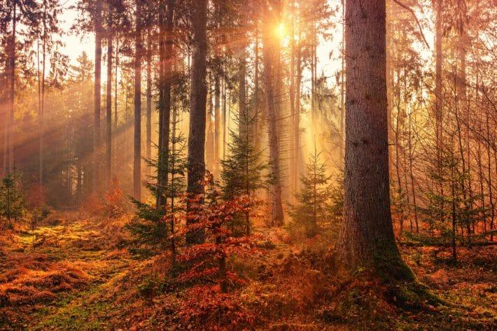 las jesienną porą