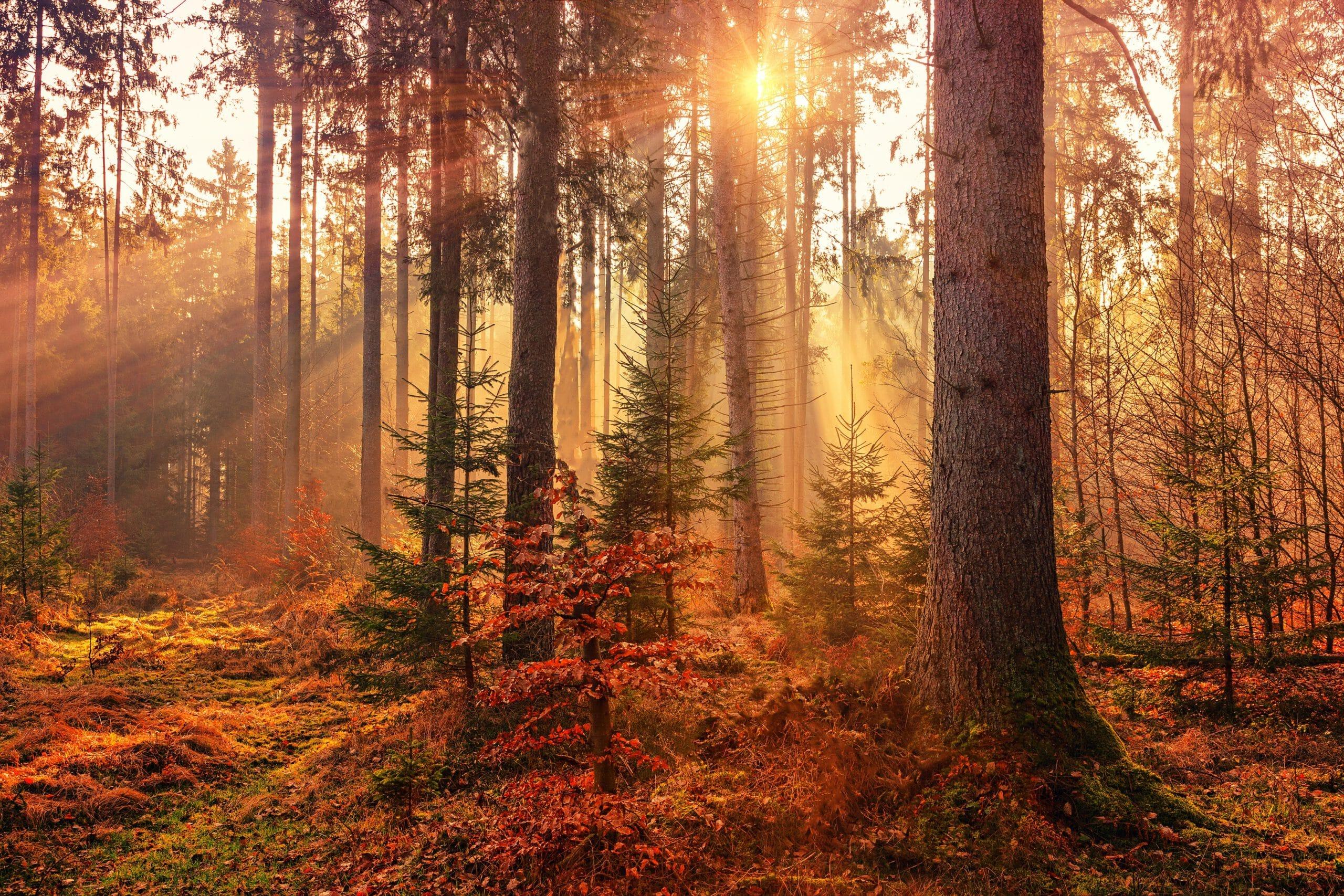 Jak zadbać o zdrowie jesienią i zimą
