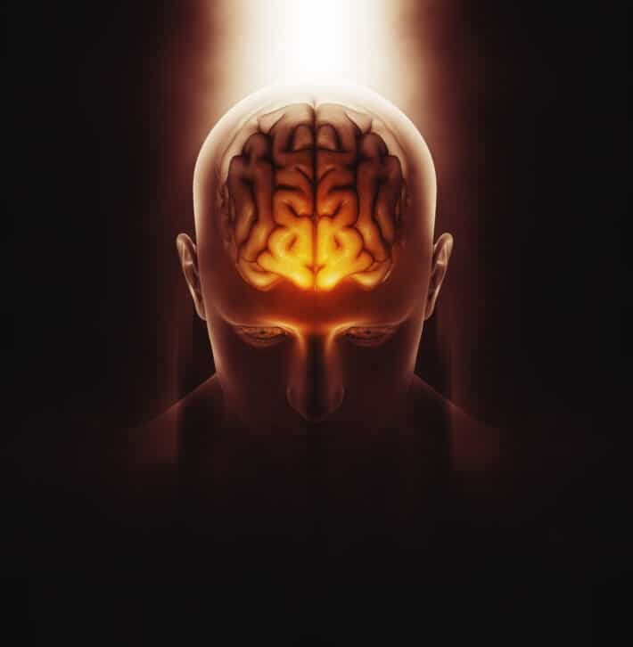 przysadka mózgowa za co odpowiada