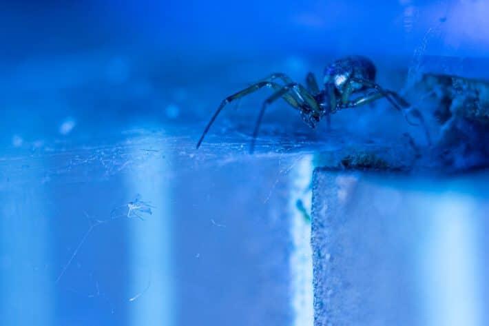 Lęk przed pająkami, czyli arachnofobia