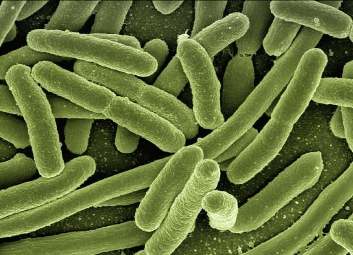 bakterie coli w kale