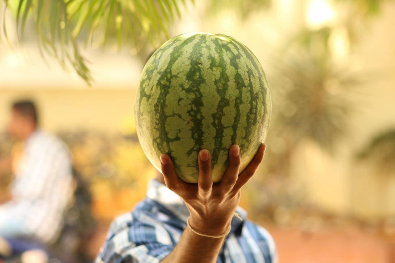 Osoba pokazująca cały arbuz o niewielkiej ilości kcal i wielu witaminach