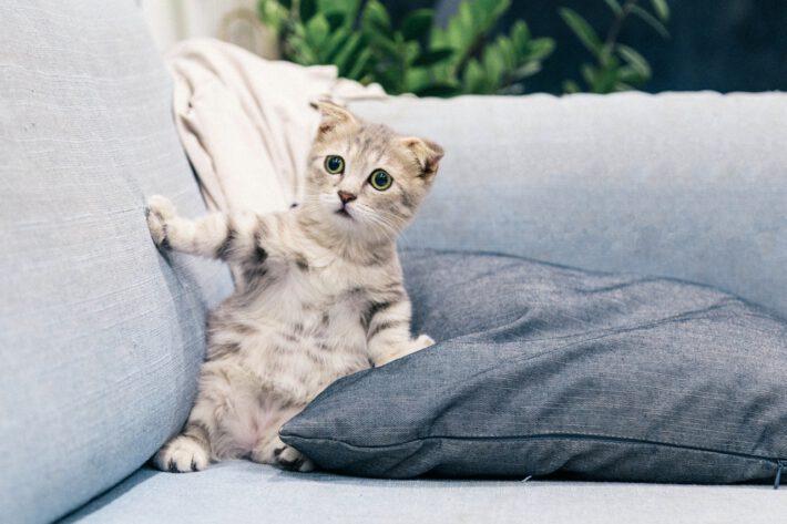 Mały kote, zwierze któe czesto wybierane jest jako wzór tatuażu