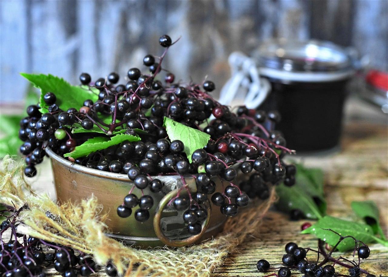 Czarny bez – właściwości, które warto znać oraz przeciwwskazania kwiatu czarnego bzu