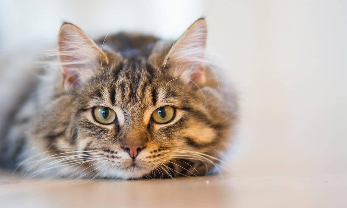 Poznaj 11 chorób od kota, którymi możesz się zarazić!