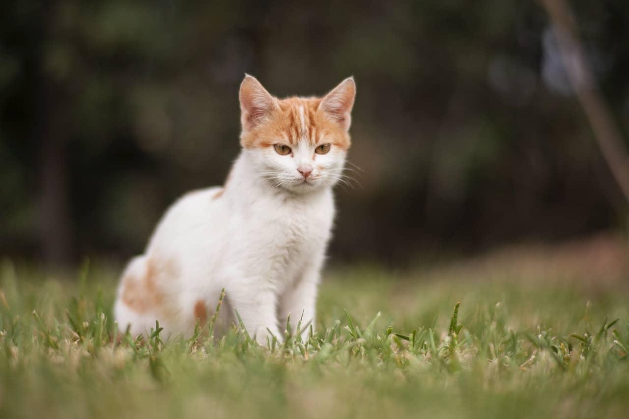 Kotek, który może przenosić choroby