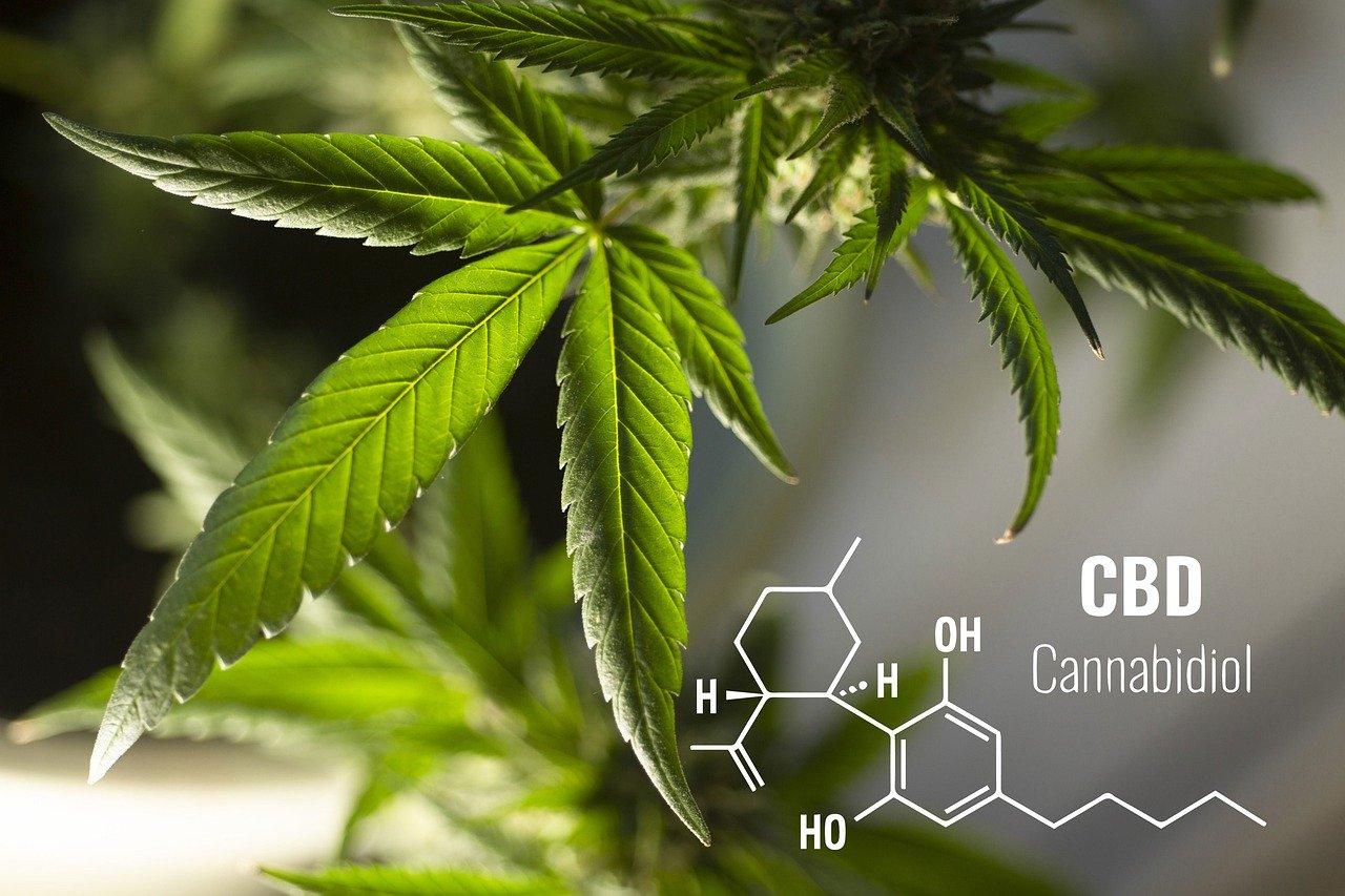 Joint CBD w walce ze stresem i uzależnieniem od nikotyny
