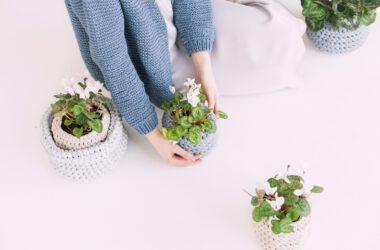 Siedzenie kwiatów w doniczki.