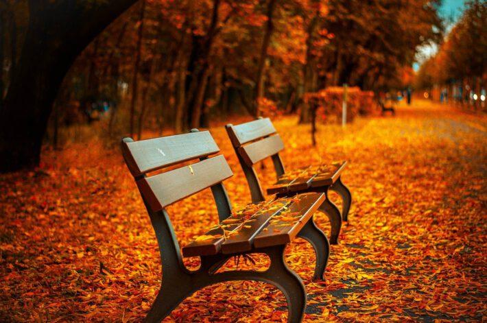 Odporonośc jesienia.