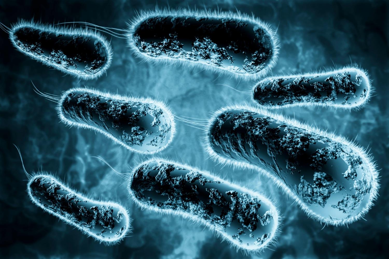 Helicobacter pylori – czym jest i jakie ma objawy? Czy bakteria helicobacter pylori jest zaraźliwa?