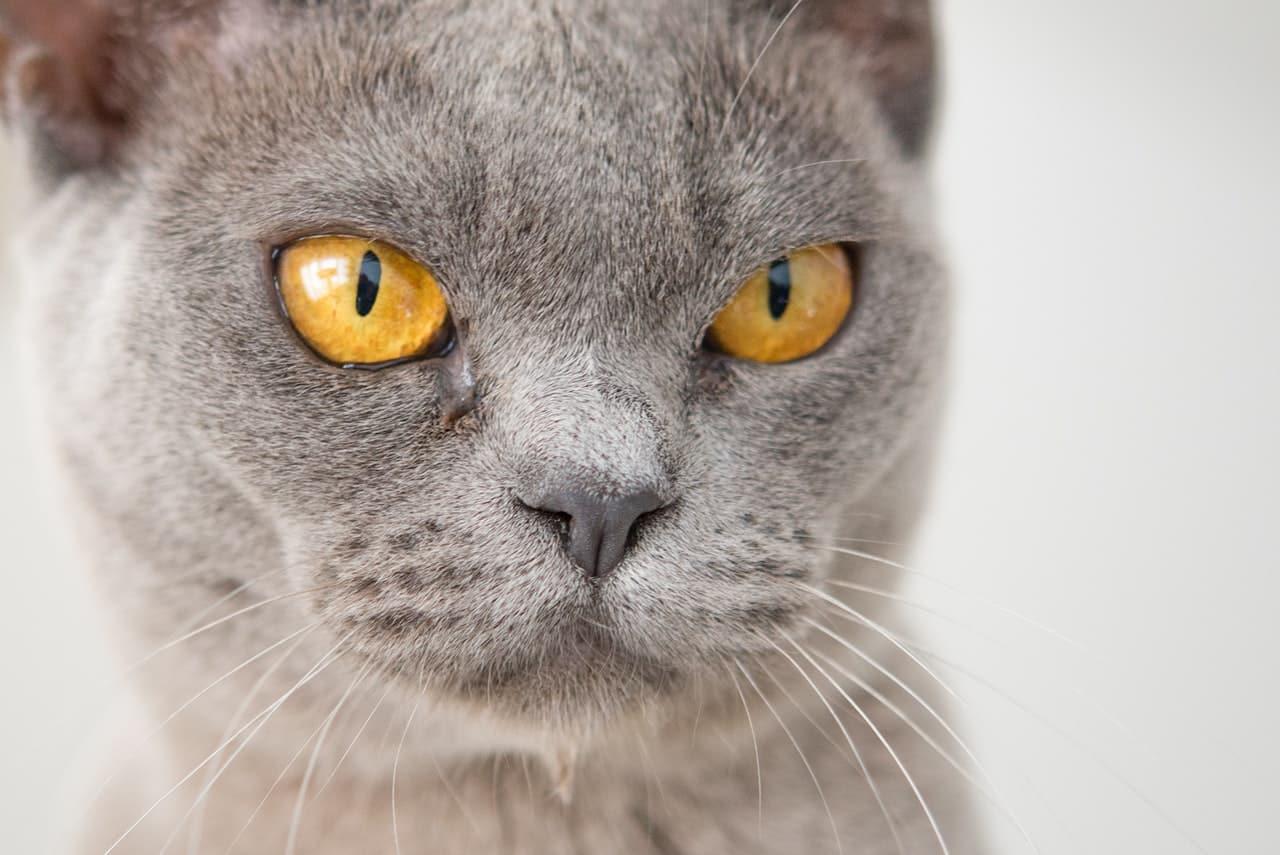 Kot z włosami zamiast sierści